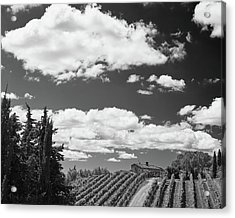 Chianti Vineyards Acrylic Print