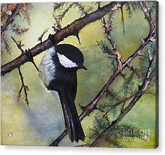 Chickadee Autumn Acrylic Print by Sibby S