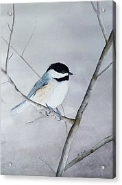 Chickadee II Acrylic Print by Laurel Best
