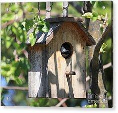 Chickadee In Birdhouse Acrylic Print