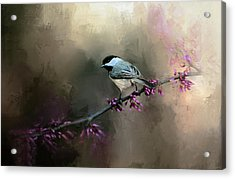 Chickadee In The Light Acrylic Print by Jai Johnson
