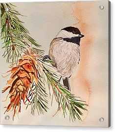 Chickadee In The Pine Acrylic Print