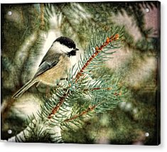 Chickadee On A Snowy Tree Acrylic Print