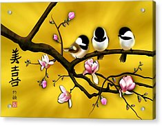 Chickadee On Blooming Magnolia Branch Acrylic Print