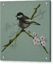 Chickadee Acrylic Print by Victoria Heryet