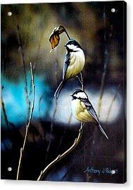 Chickadees Acrylic Print