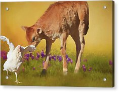 Chicken Little Acrylic Print by Donna Kennedy