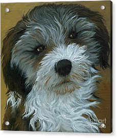 Chico - Dog Portrait Oil Painting Acrylic Print by Linda Apple