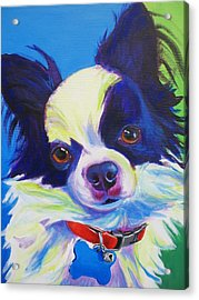 Chihuahua - Esso-gomez Acrylic Print by Alicia VanNoy Call