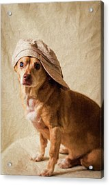 Chihuahua In A Newsboy Hat Acrylic Print