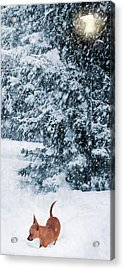Chihuahua In The Snow - Puppy Winterscape Acrylic Print by Rayanda Arts