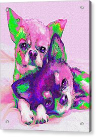 Chihuahua Love Acrylic Print by Jane Schnetlage