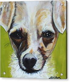 Acrylic Print featuring the painting Chihuahua Mix- Roxie by Laura  Grisham