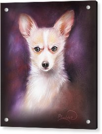 Acrylic Print featuring the drawing Chihuahua No. 1 by Patricia Lintner