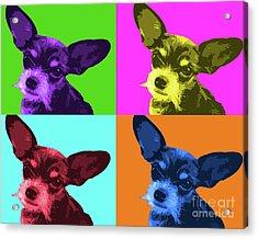 Chihuahua Pop Art Acrylic Print