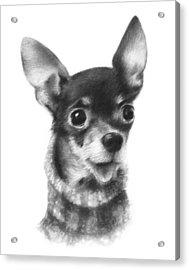 Acrylic Print featuring the drawing Chihuahua Pup by Natasha Denger
