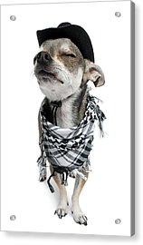 Chihuahua Wearing A Scarf And A Cowboy Hat Acrylic Print by Life On White