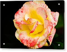Chihuly Acrylic Print
