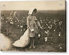 Child Labor, A Young Girl Picking Acrylic Print