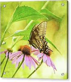 Child Of Sun And Summer Acrylic Print by Lois Bryan