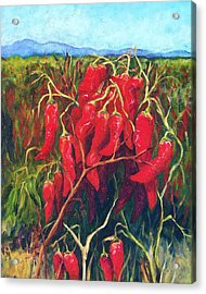 Chile Field Acrylic Print by Candy Mayer
