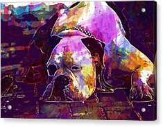 Chill Out Dog Boxer Relax Lazy  Acrylic Print