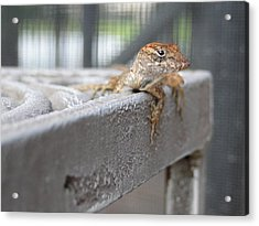 Chillin' Acrylic Print by Gail Butters Cohen