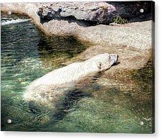 Acrylic Print featuring the photograph Chillin' Polar Bear by Pennie  McCracken