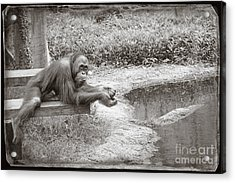 Acrylic Print featuring the photograph Chillin by Sandy Adams