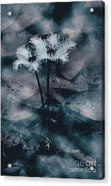 Chilling Blue Lagoon Details Acrylic Print by Jorgo Photography - Wall Art Gallery
