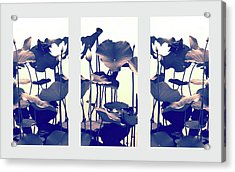 Chimera Triptych Acrylic Print