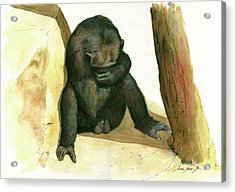 Chimp Acrylic Print by Juan Bosco