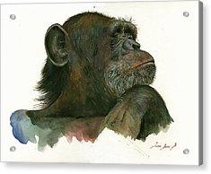 Chimp Portrait Acrylic Print