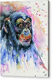 Chimp Acrylic Print by Zaira Dzhaubaeva