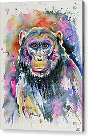 Chimpanzee Acrylic Print by Zaira Dzhaubaeva