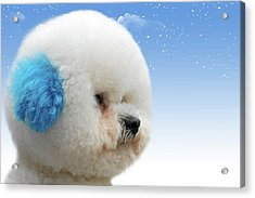 China's Latest Craze - Dyeing Pets Acrylic Print by Christine Till