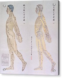 Chinese Chart Of Acupuncture Points Acrylic Print by Everett