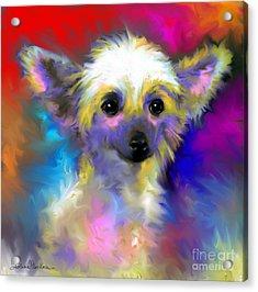 Chinese Crested Dog Puppy Painting Print Acrylic Print by Svetlana Novikova