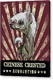 Chinese Crested Revolution Acrylic Print