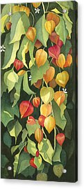 Chinese Lanterns Acrylic Print by Anne Havard