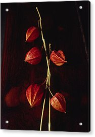 Chinese Lanterns Acrylic Print by Art Ferrier