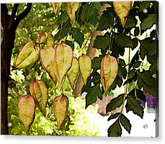 Chinese Lanterns Acrylic Print by Paul Cutright