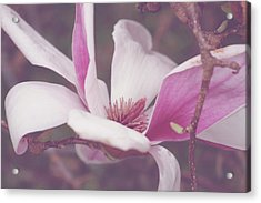 Acrylic Print featuring the photograph Chinese Magnolia Bloom by Toni Hopper