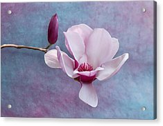 Chinese Magnolia Flower With Bud Acrylic Print