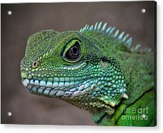 Acrylic Print featuring the photograph Chinese Water Dragon by Savannah Gibbs