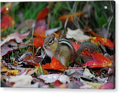 Chip The Munk Acrylic Print
