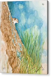 Chipmonk Acrylic Print by Wade Clark