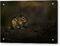 Acrylic Print featuring the photograph Chipmunk On Rock by Michael Cummings
