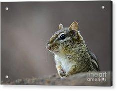 Chipmunk Profile Acrylic Print