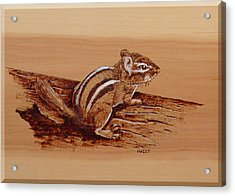 Acrylic Print featuring the pyrography Chipmunk by Ron Haist